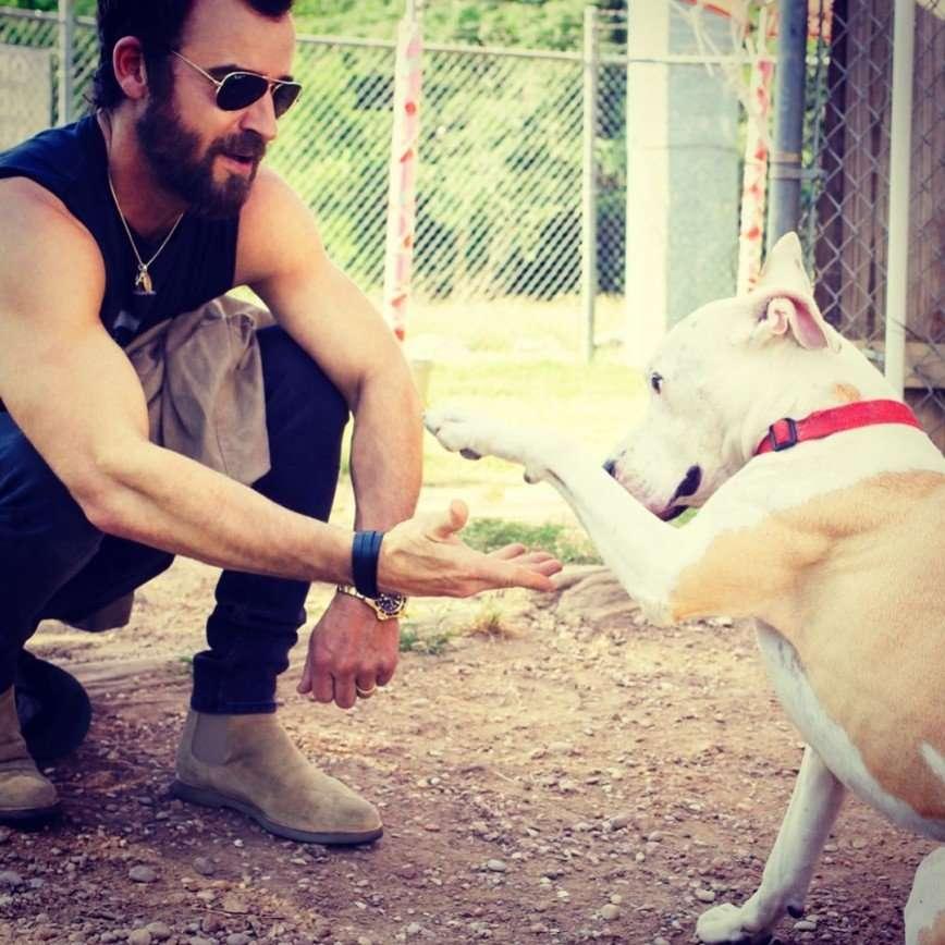 «Собак не поделили»: Энистон и Теру приостановили бракоразводный процесс