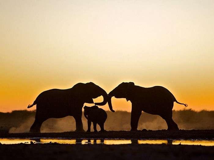 Лучшие фотографии минувшей недели от National Geographic