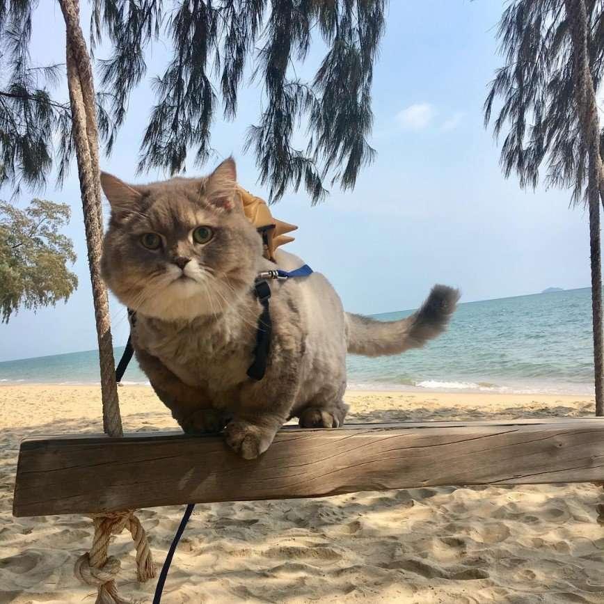 Кот Бон Бон - звезда тайского интернета