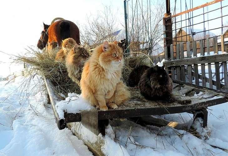 Звезды рунета: колония котов из под Барнаула