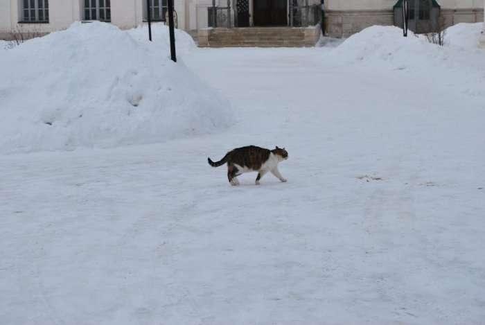 В Москву пришла настоящая зима!!!
