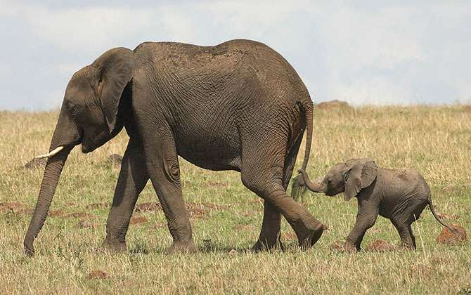 Забавные маленькие слонята