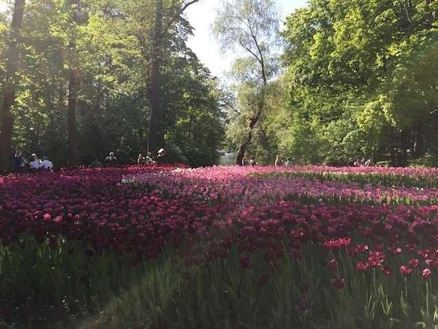 Тюльпаны Елагина острова Санкт-Петербурга