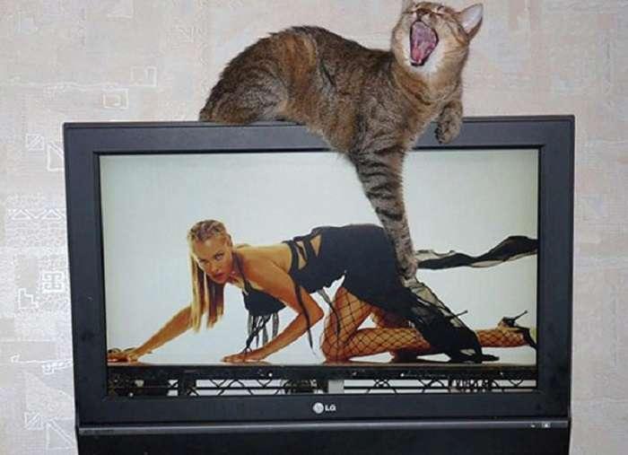 Фотографии котов, сделанные в самый подходящий момент